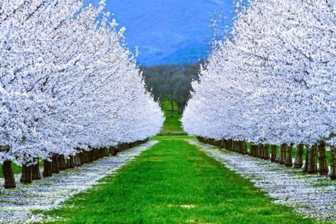 camino de arboles blancos